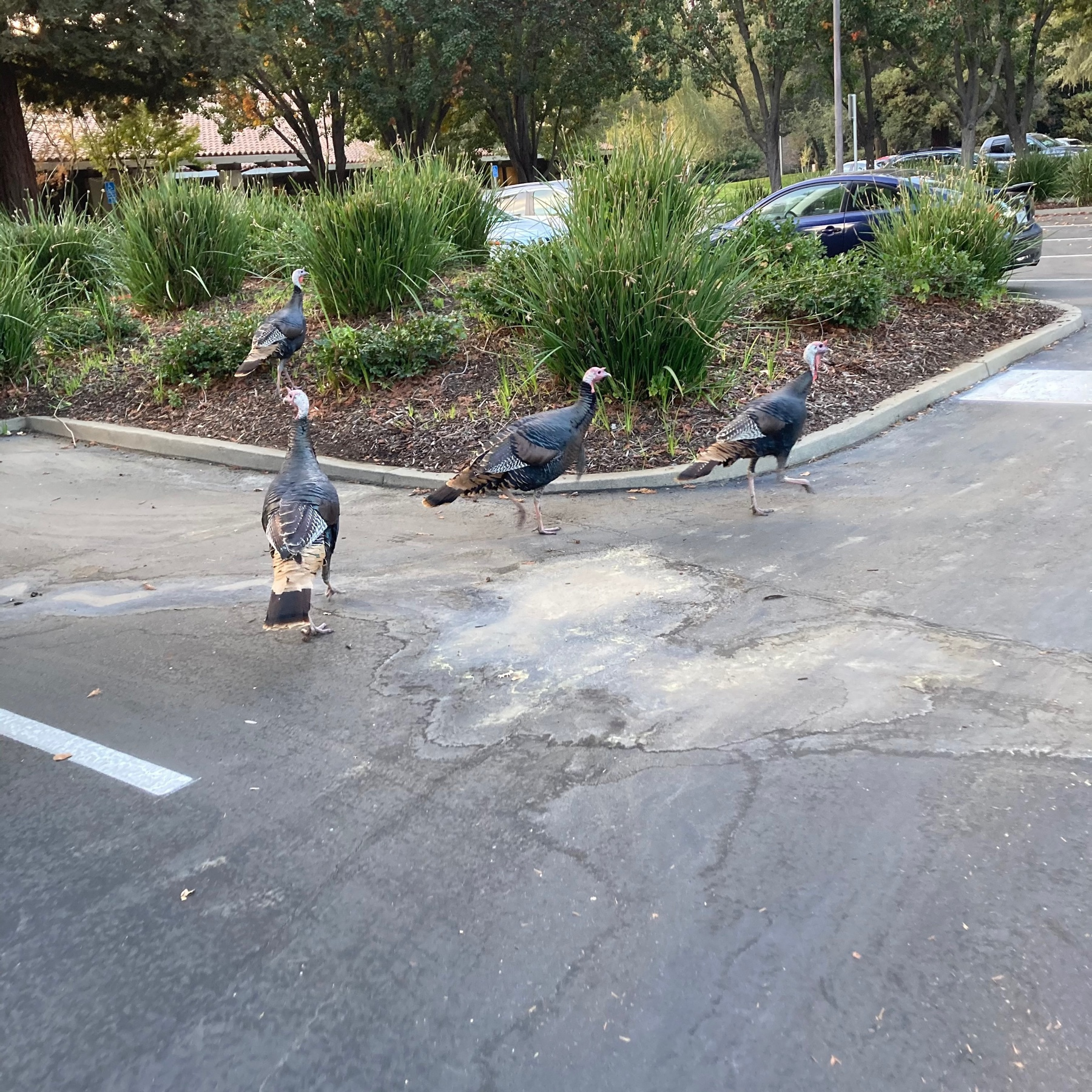 Some turkeys just hanging out.