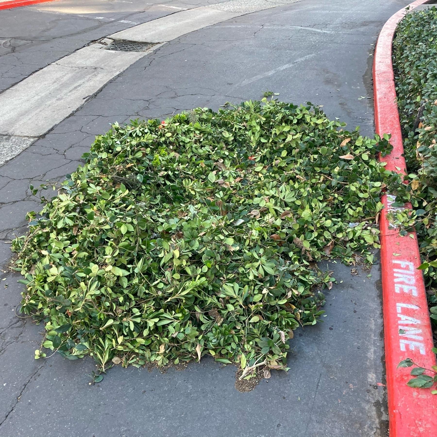 Leaf trimmings.