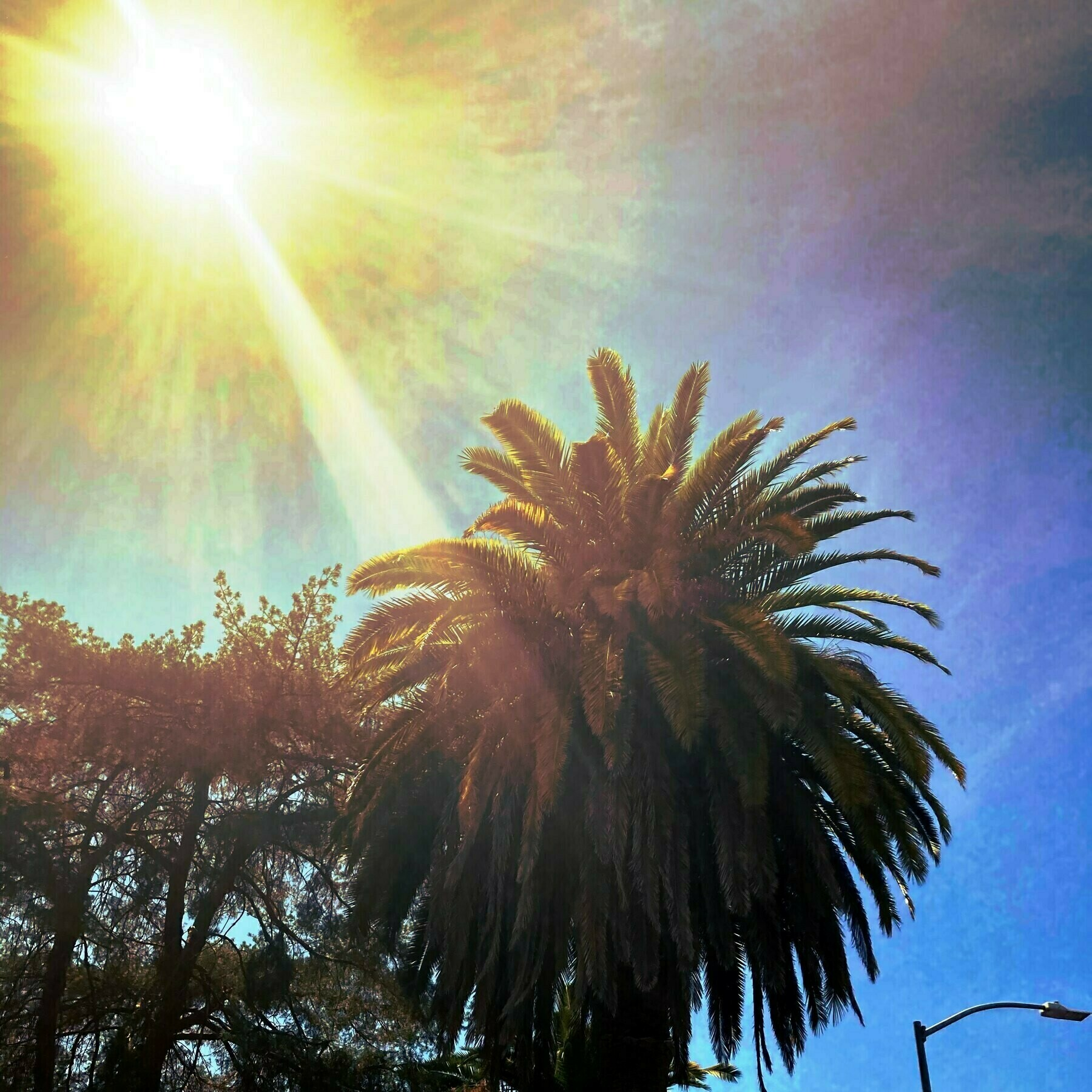 Palm tree witha solar flare.