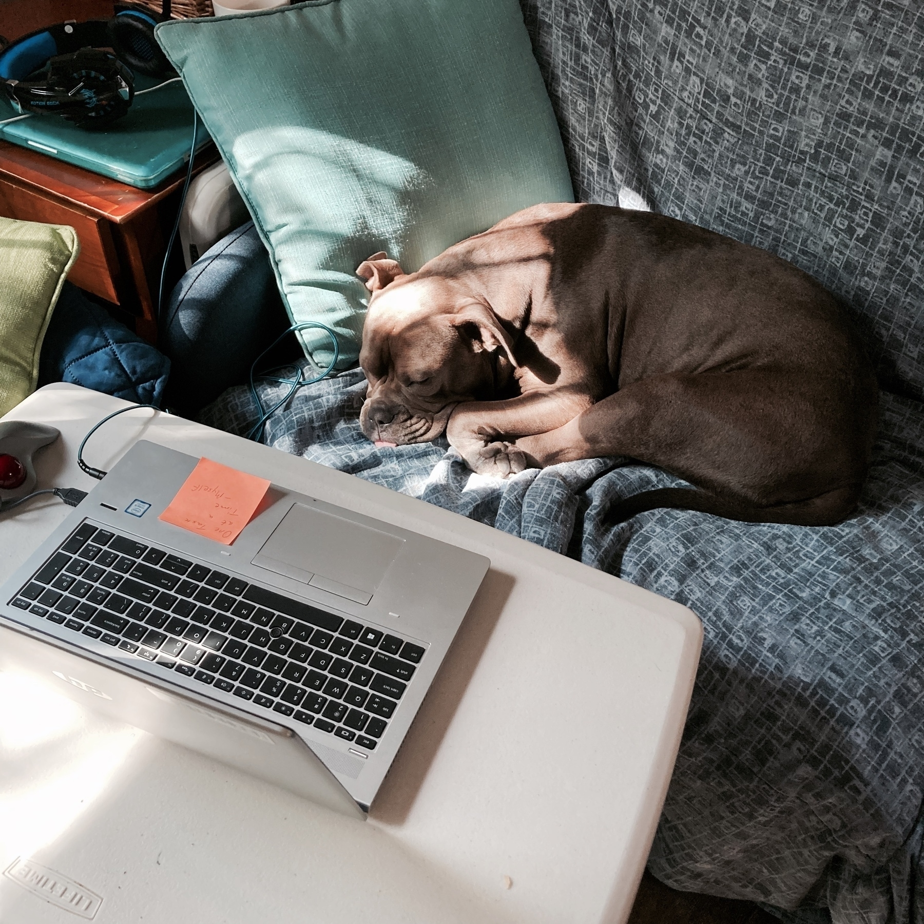 Lillie sleeping in front of laptop.