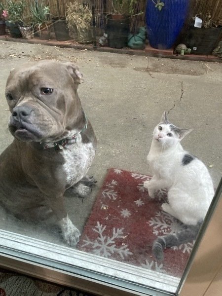 Dog and cat sitting next to each other.