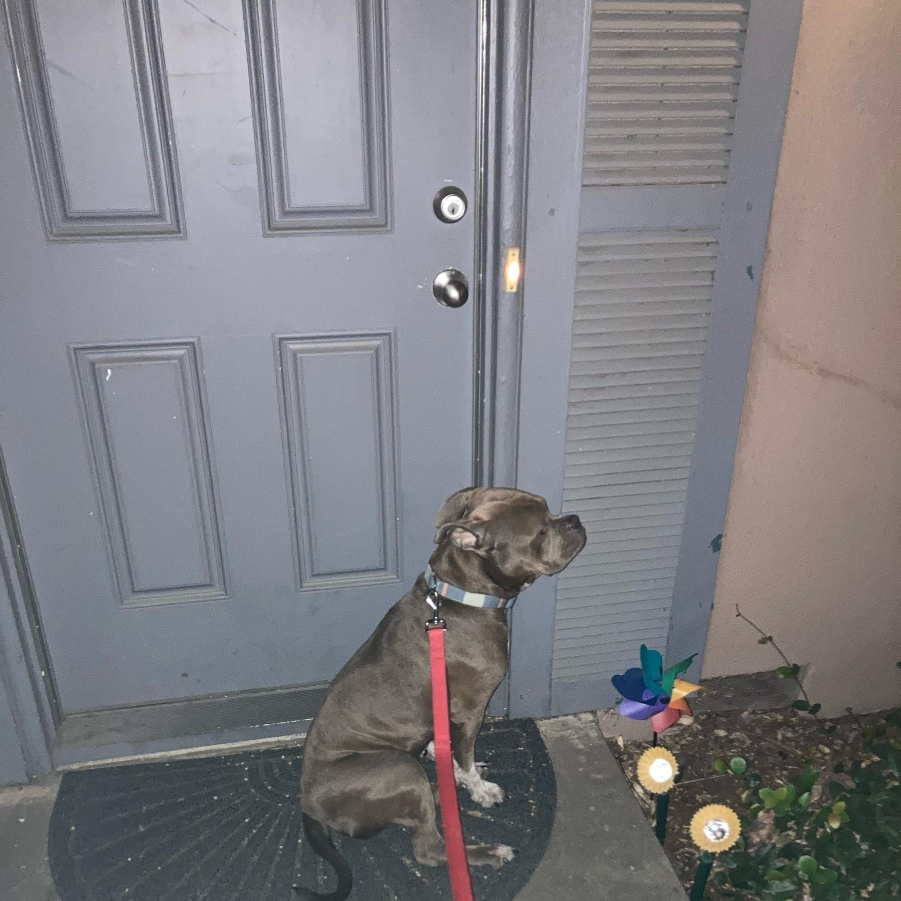Dog sitting outside of door.