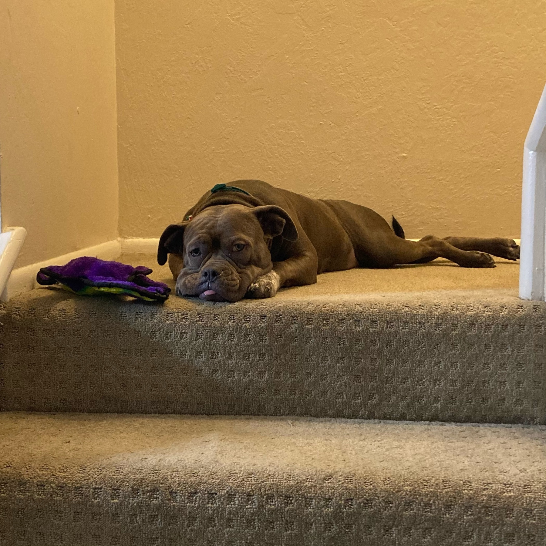 Dog on the stairs.