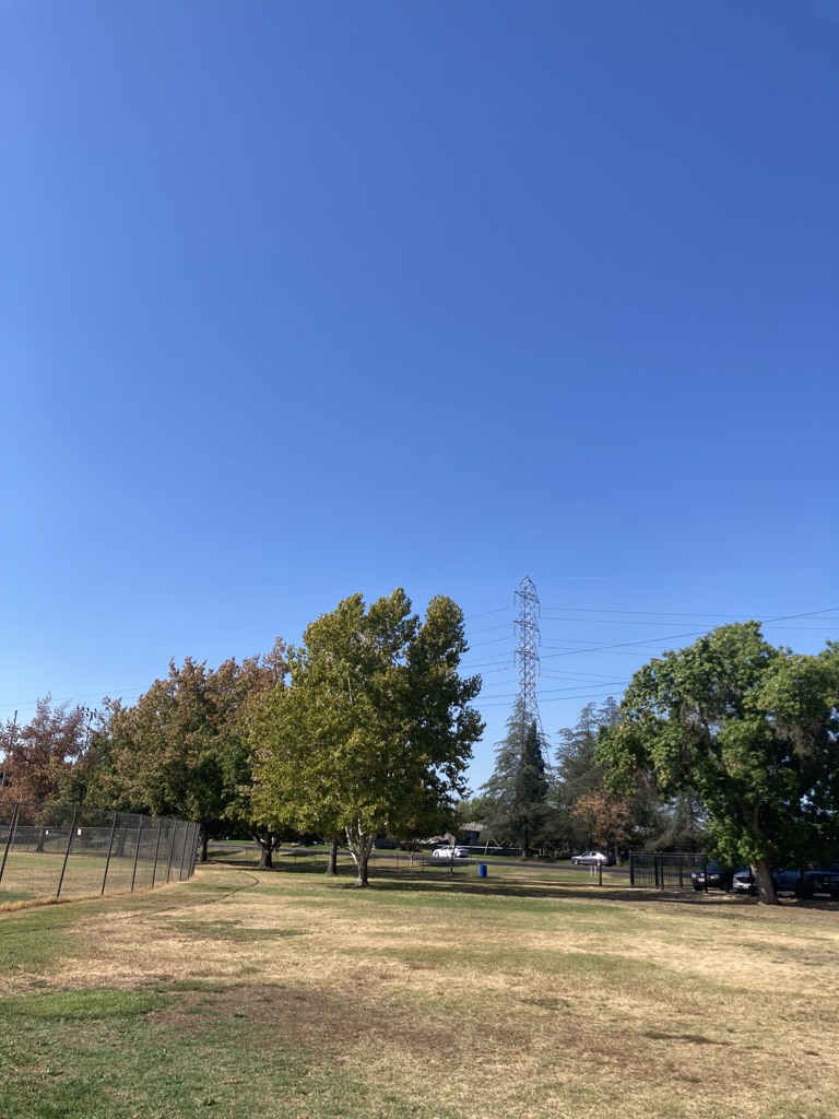 A clear day with blue skies and dry grass.