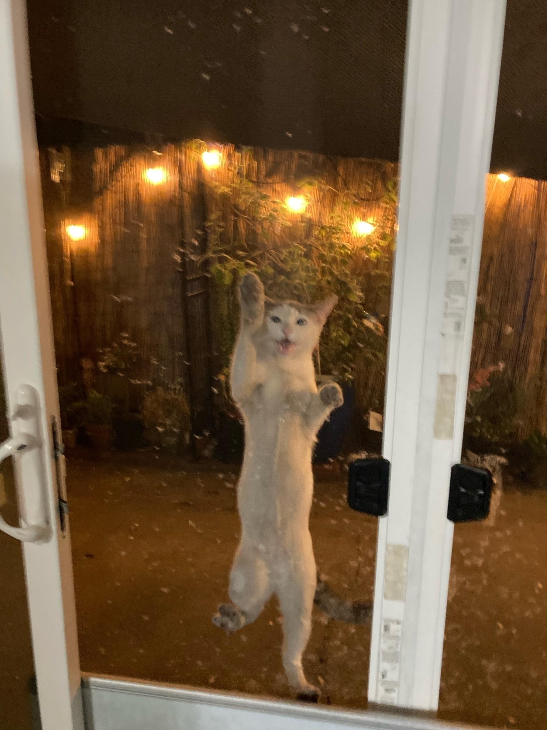 cat climing the screen door.