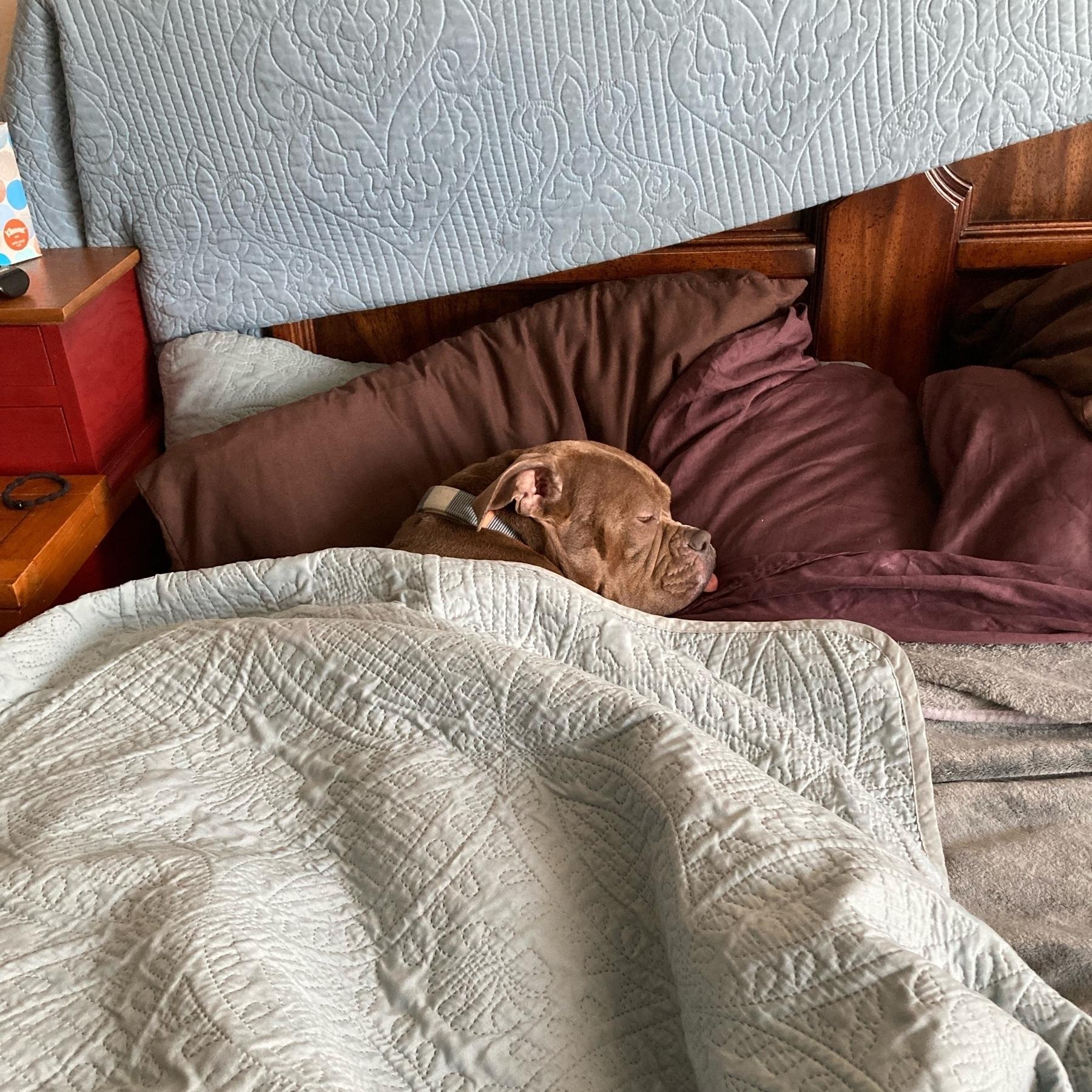 Dog sleeping in bed.