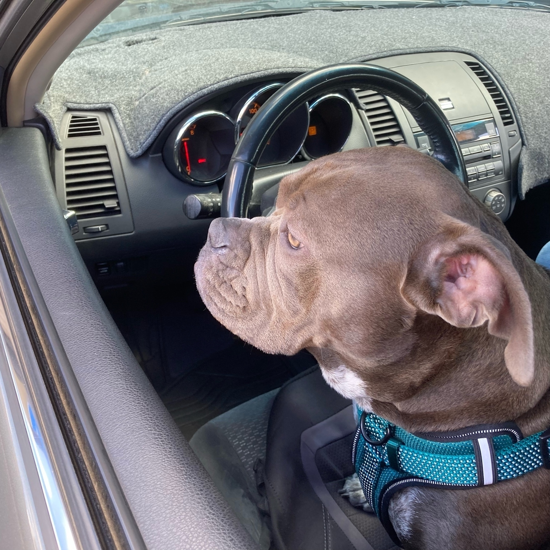 Lillie in the driving seat.